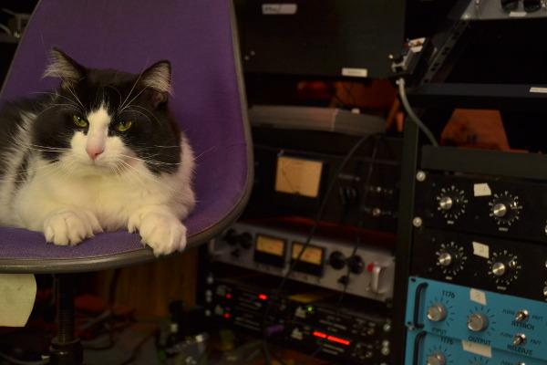 George_Harrison_Cat-web