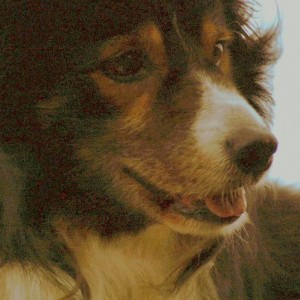 """Dog Day - """"In Another Life"""" [Dir. Seth Smith]"""