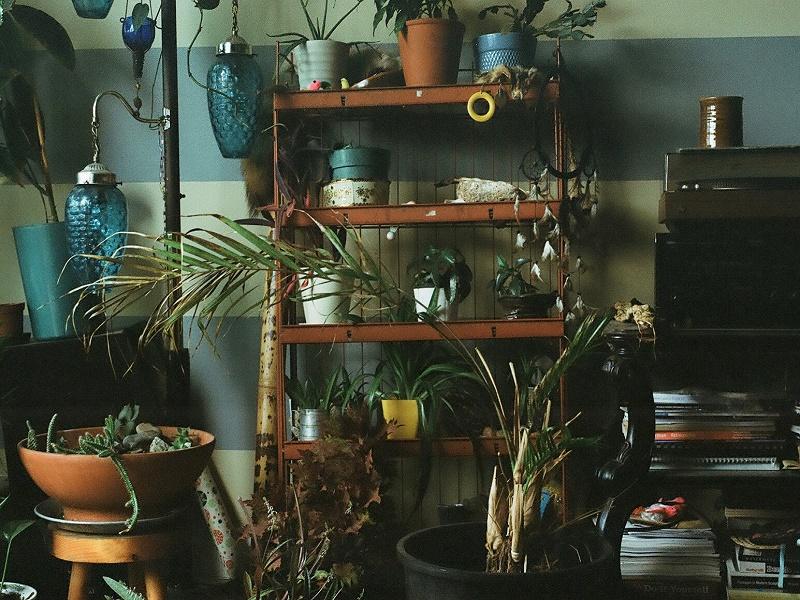Weird_Canada-DOOMSQUAD-Plants