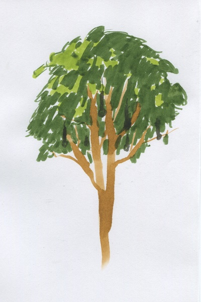 Weird_Canada-Tree